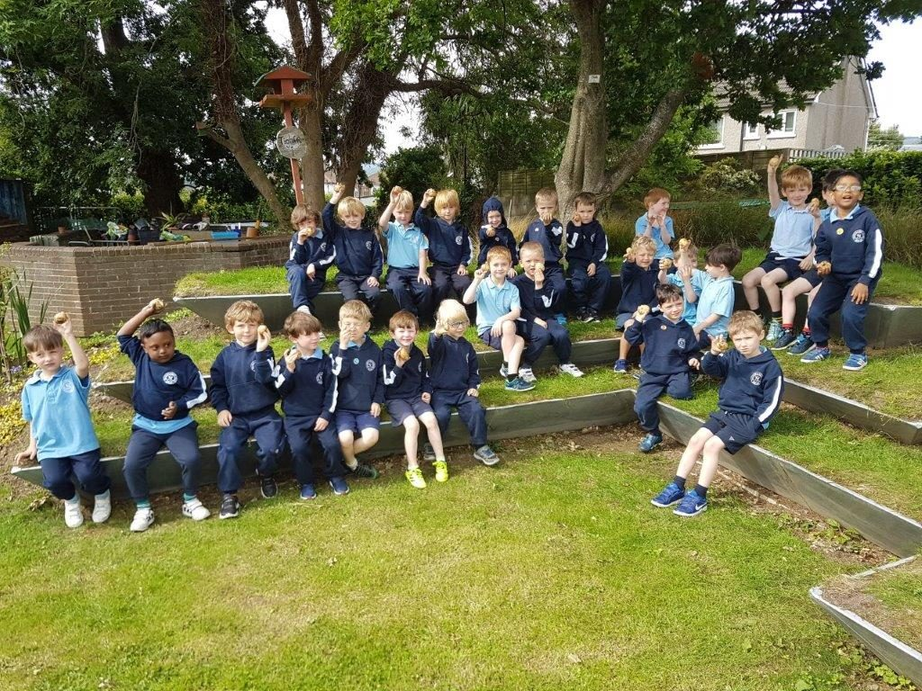 Junior Infants harvesting potatoes